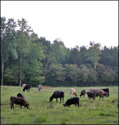 Bagley Farms pasture photo